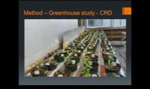 Sebastian Thomas Dietrich - Admixing of Subsoil & Amendment of Peat Biochar Improves Productivity...